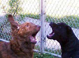 Dog fight dog play dog daycare ann arbor