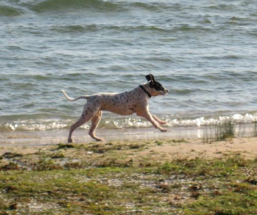 Whimsy Running
