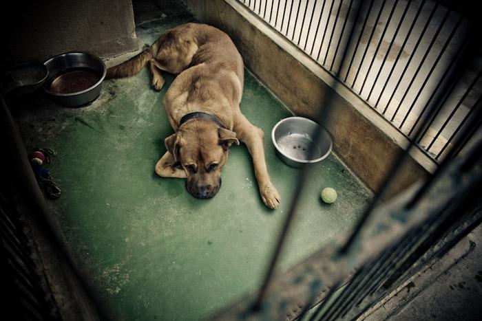 Naughty Dog Cafe Shelter Dog Ann Arbor